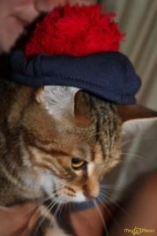 кошка курильский бобтейл фото